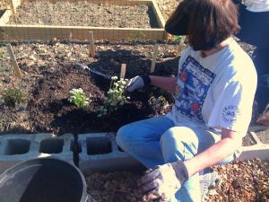 Planting the Flower Bed